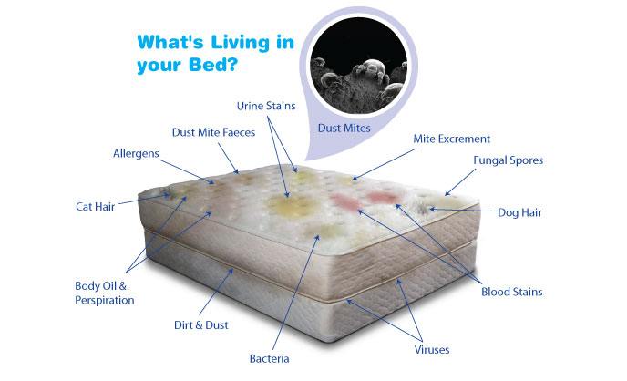 carpet cleaning gold coast mattress cleaning carpet cleaning gold coast. Black Bedroom Furniture Sets. Home Design Ideas